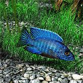 Аквамир - 3D аквариум скриншот 4