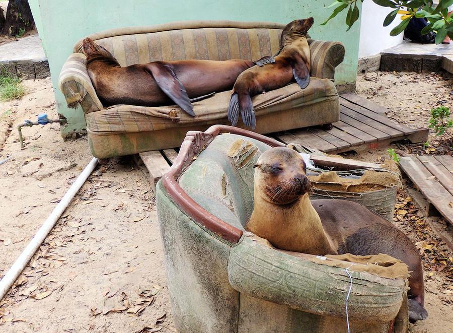 Смешные картинки об отдыхе дома, настоящему другу
