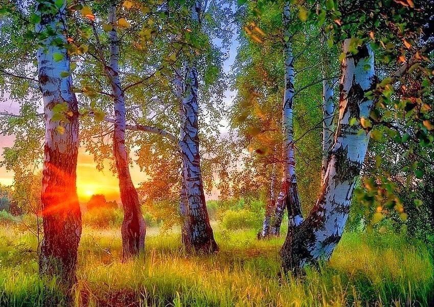 все картинки хорошего утра природа картинки предъявляются