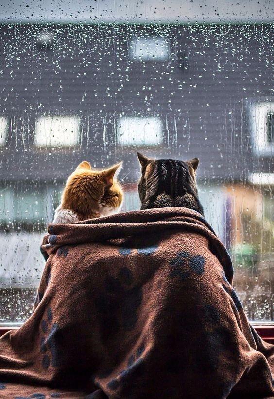 дождливая осень прикольные картинки людям
